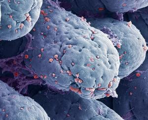 Клетки кишечника